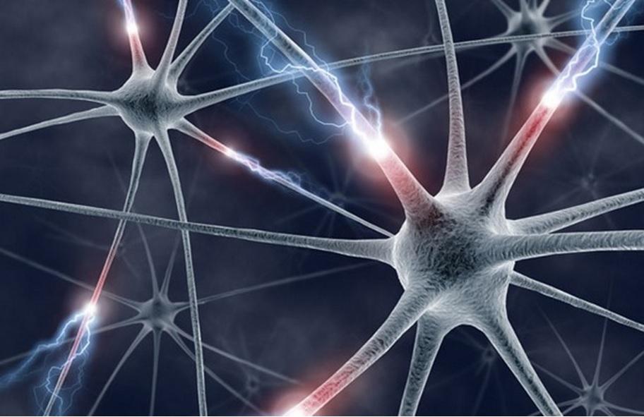 биологическая нейронная сеть